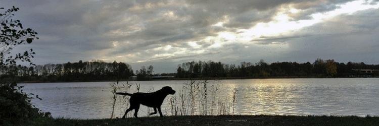 silouet hond langs de waterlijn