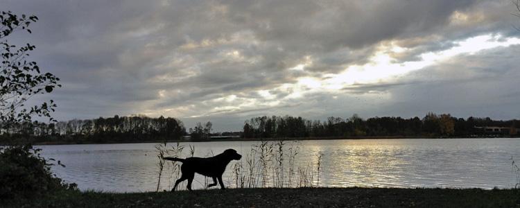 hond in silouet langs de waterlijn bij zonsondergang
