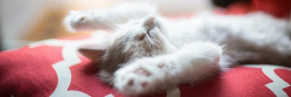 kitten sleeping back
